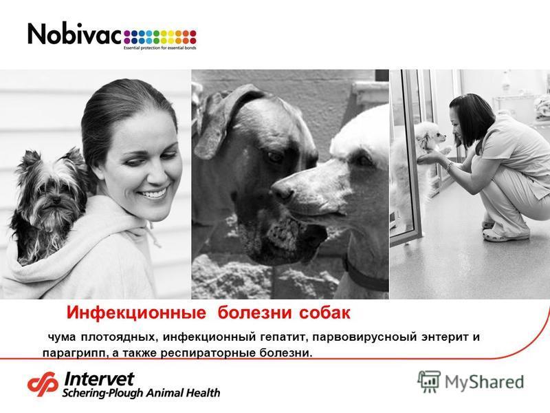 Инфекционные болезни собак чума плотоядных, инфекционный гепатит, парвовирусный энтерит и парагрипп, а также респираторные болезни.