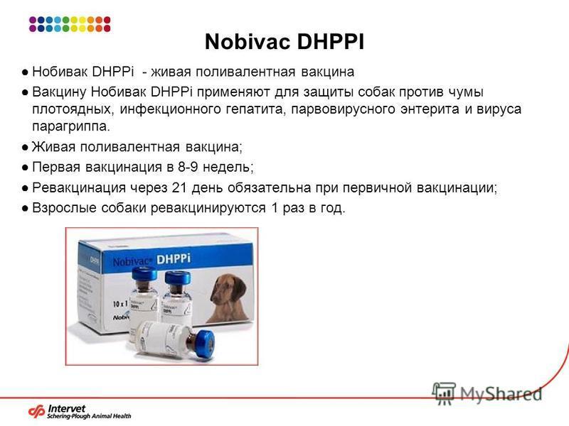 Nobivac DHPPI Нобивак DHPPi - живая поливалентная вакцина Вакцину Нобивак DHPPi применяют для защиты собак против чумы плотоядных, инфекционного гепатита, парвовирусного энтерита и вируса парагриппа. Живая поливалентная вакцина; Первая вакцинация в 8
