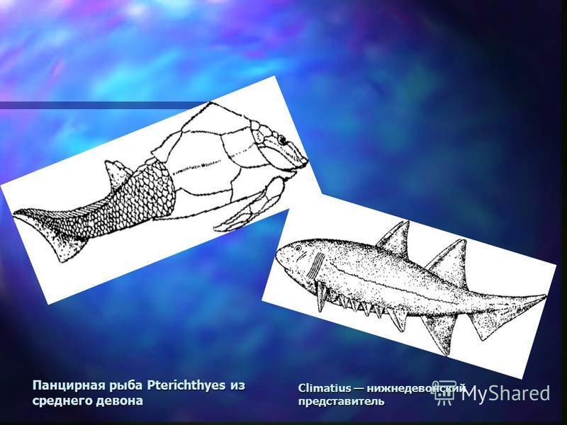 Панцирная рыба Pterichthyes из среднего девона Climatius нижнедевонский представитель