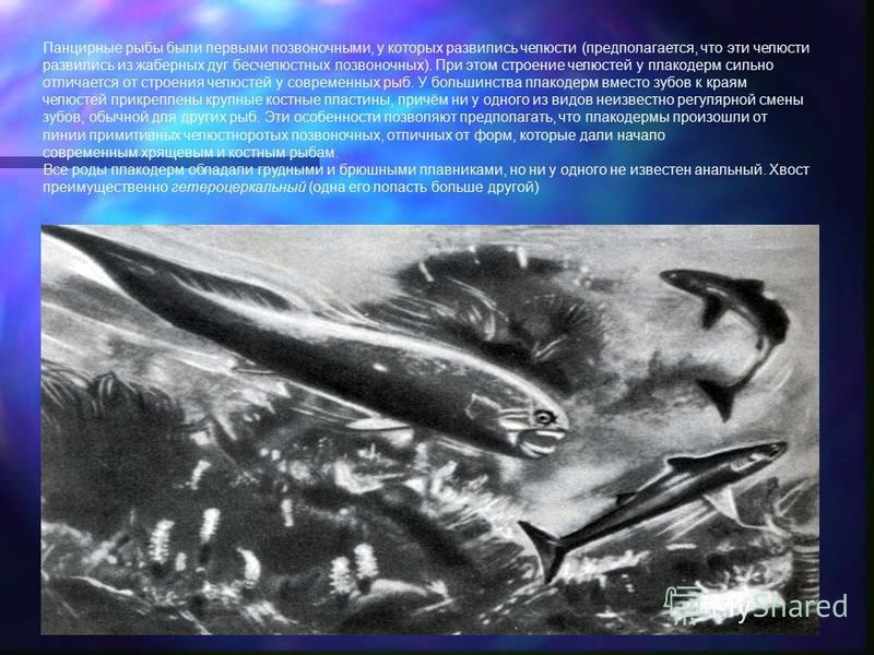 Панцирные рыбы были первыми позвоночными, у которых развились челюсти (предполагается, что эти челюсти развились из жаберных дуг бесчелюстных позвоночных). При этом строение челюстей у плакодерм сильно отличается от строения челюстей у современных ры