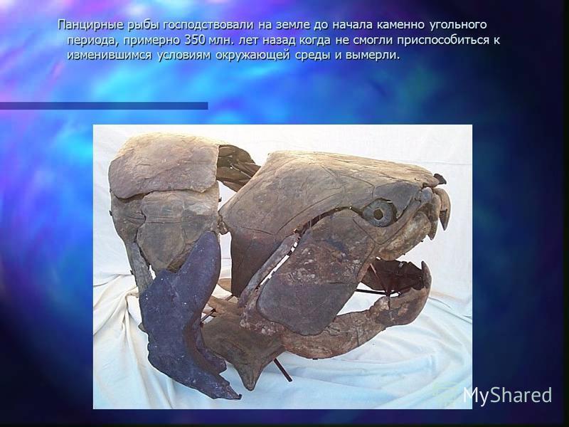 Панцирные рыбы господствовали на земле до начала каменно угольного периода, примерно 350 млн. лет назад когда не смогли приспособиться к изменившимся условиям окружающей среды и вымерли. Панцирные рыбы господствовали на земле до начала каменно угольн