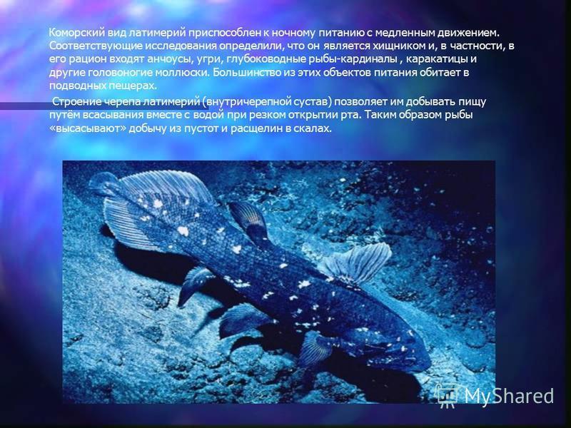 Коморский вид латимерий приспособлен к ночному питанию с медленным движением. Соответствующие исследования определили, что он является хищником и, в частности, в его рацион входят анчоусы, угри, глубоководные рыбы-кардиналы, каракатицы и другие голов