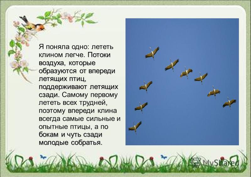 Потоки воздуха, которые образуются от впереди летящих птиц, поддерживают летящих сзади. о бокам и чуть сзади молодые собратья. Я поняла одно: лететь клином легче. Потоки воздуха, которые образуются от впереди летящих птиц, поддерживают летящих сзади.