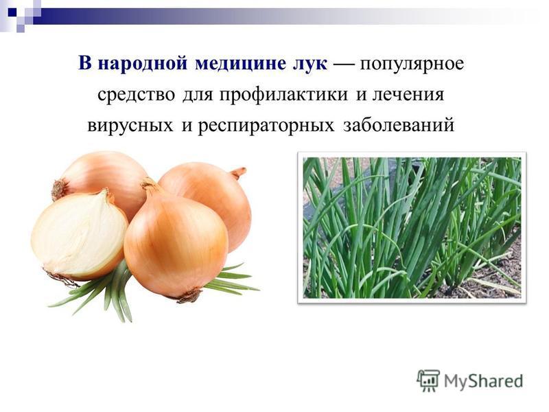 В народной медицине лук популярное средство для профилактики и лечения вирусных и респираторных заболеваний