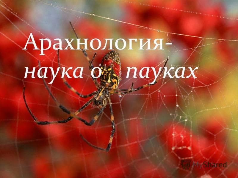 Арахнология- наука о пауках