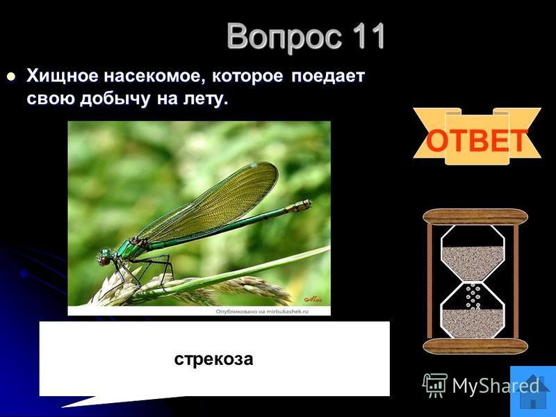 Вопрос 10 Какую птицу называют санитаром леса? Какую птицу называют санитаром леса? ОТВЕТ дятел