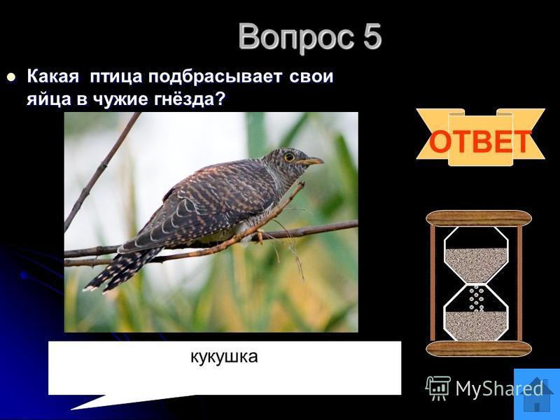 Вопрос 4 Какие ноги у жирафа длиннее- передние или задние? Какие ноги у жирафа длиннее- передние или задние? ОТВЕТ Все ноги одинаковые