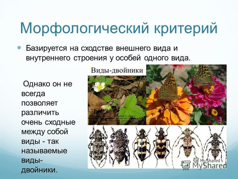 Морфологический критерий Базируется на сходстве внешнего вида и внутреннего строения у особей одного вида. Однако он не всегда позволяет различить очень сходные между собой виды - так называемые виды- двойники.