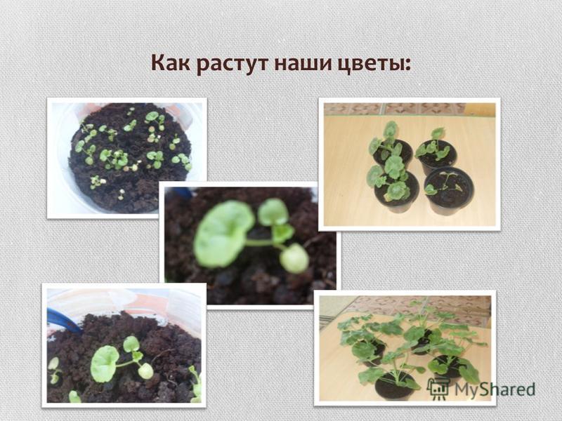 Как растут наши цветы: