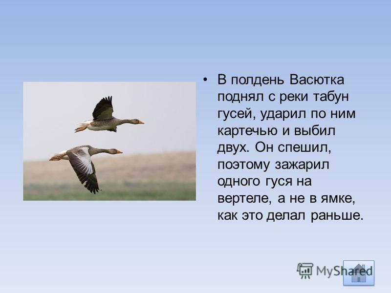 В полдень Васютка поднял с реки табун гусей, ударил по ним картечью и выбил двух. Он спешил, поэтому зажарил одного гуся на вертеле, а не в ямке, как это делал раньше.