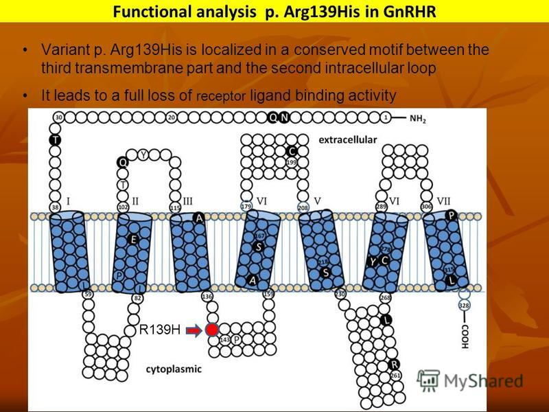 Variant p. Arg139His is localized in a conserved motif between the third transmembrane part and the second intracellular loop It leads to a full loss of receptor ligand binding activity Functional analysis p. Arg139His in GnRHR R139H