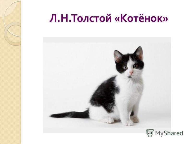 Л. Н. Толстой « Котёнок »