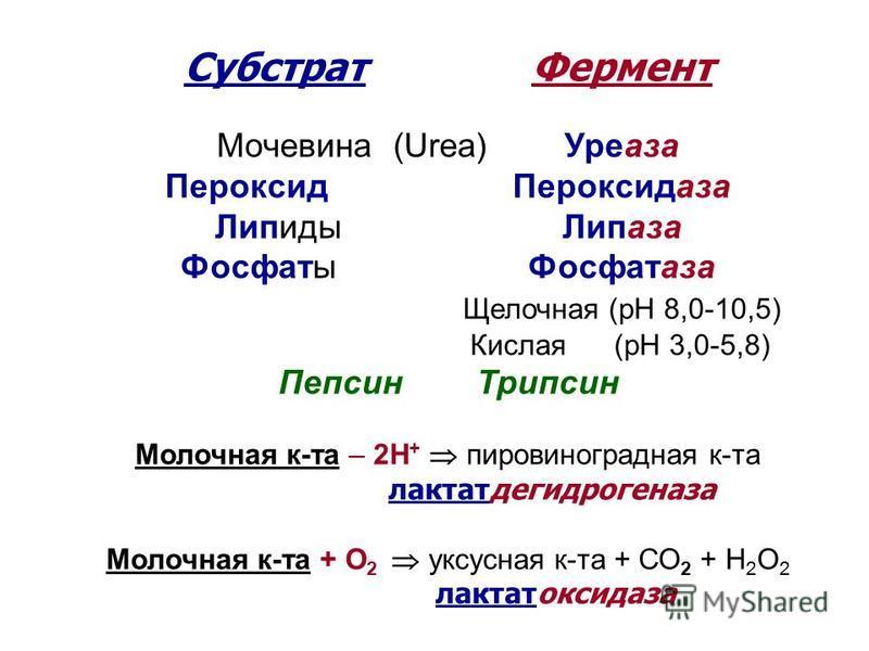 Субстрат Фермент Мочевина (Urea) Уреаза Пероксид Пероксидаза Липиды Липаза Фосфаты Фосфатаза Щелочная (рН 8,0-10,5) Кислая (рН 3,0-5,8) Пепсин Трипсин Молочная к-та – 2Н + пировиноградная к-та лактатдегидрогеназа Молочная к-та + О 2 уксусная к-та + С