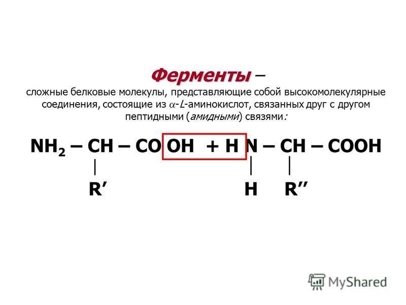 Ферменты Ферменты – сложные белковые молекулы, представляющие собой высокомолекулярные соединения, состоящие из -L-аминокислот, связанных друг с другом пептидными (амидными) связями: NH 2 – CH – CO OH + H N – CH – COOH R H R