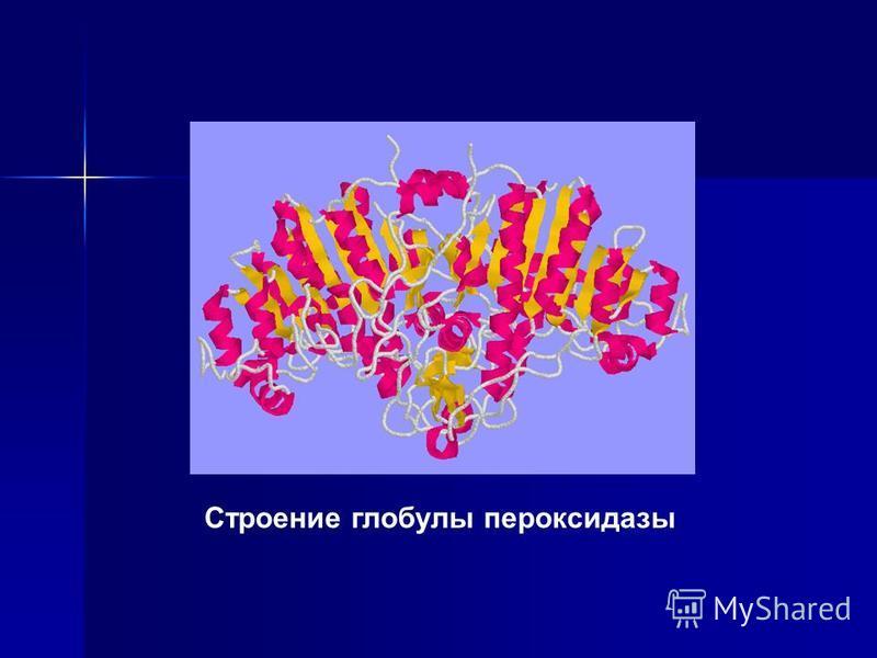 Строение глобулы пероксидазы