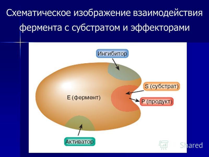 Схематическое изображение взаимодействия фермента с субстратом и эффекторами