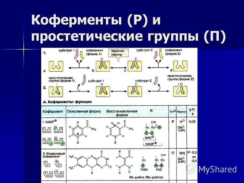 Коферменты (Р) и простетические группы (П)