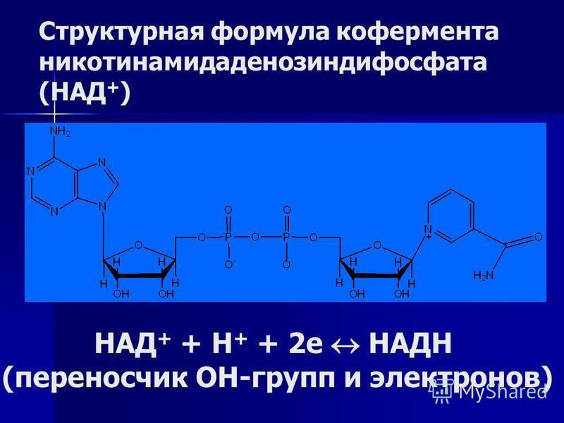 Структурная формула кофермента никотинамидаденозиндифосфата (НАД + ) НАД + + Н + + 2 е НАДН (переносчик ОН-групп и электронов)