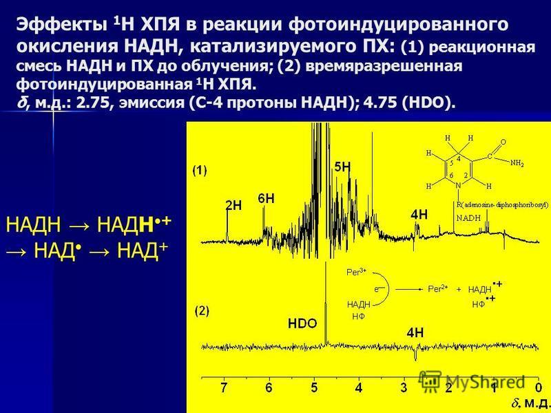 Эффекты 1 Н ХПЯ в реакции фотоиндуцированного окисления НАДН, катализируемого ПХ: (1) реакционная смесь НАДН и ПХ до облучения; (2) времяразрешенная фотоиндуцированная 1 Н ХПЯ. δ, м.д.: 2.75, эмиссия (С-4 протоны НАДН); 4.75 (HDO). НАДН НАДН+ НАД НАД