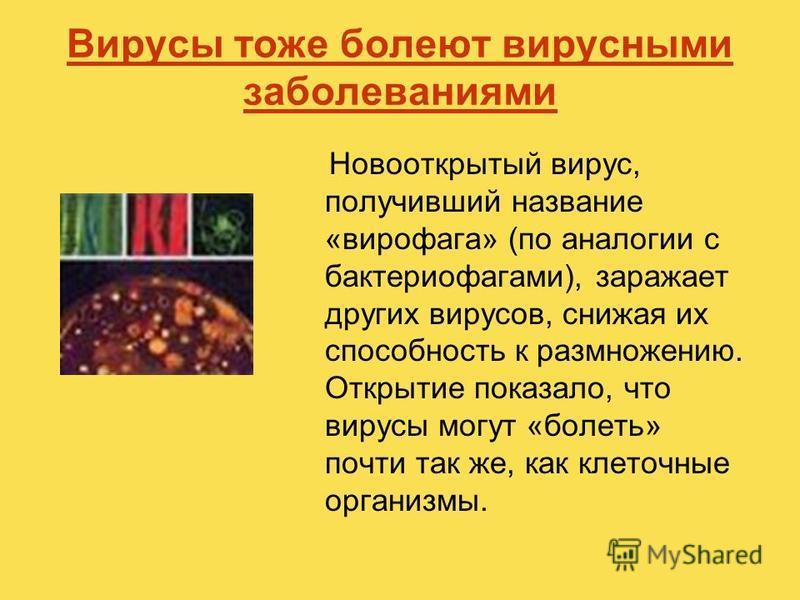Вирусы тоже болеют вирусными заболеваниями Новооткрытый вирус, получивший название «вирофага» (по аналогии с бактериофагами), заражает других вирусов, снижая их способность к размножению. Открытие показало, что вирусы могут «болеть» почти так же, как