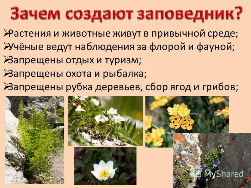 Растения и животные живут в привычной среде; Учёные ведут наблюдения за флорой и фауной; Запрещены отдых и туризм; Запрещены охота и рыбалка; Запрещены рубка деревьев, сбор ягод и грибов;