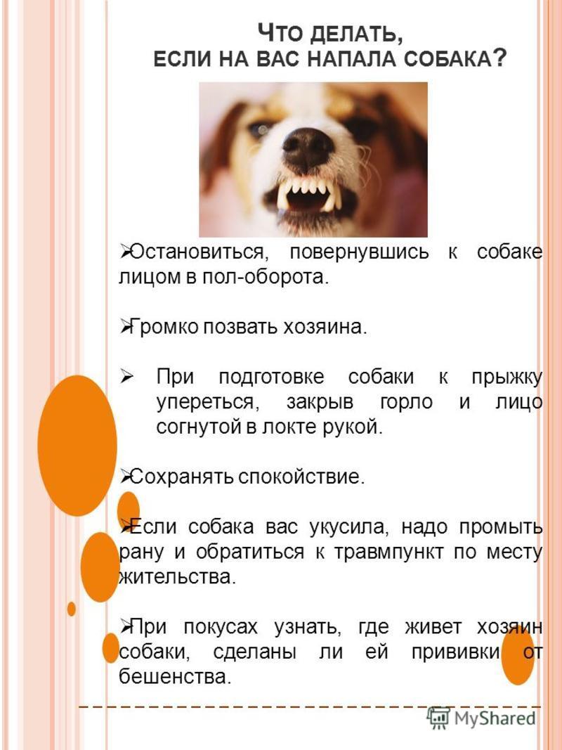 Ч ТО ДЕЛАТЬ, ЕСЛИ НА ВАС НАПАЛА СОБАКА ? Остановиться, повернувшись к собаке лицом в пол-оборота. Громко позвать хозяина. При подготовке собаки к прыжку упереться, закрыв горло и лицо согнутой в локте рукой. Сохранять спокойствие. Если собака вас уку