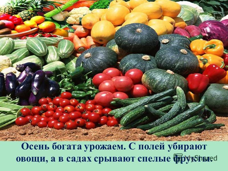 Осень богата урожаем. С полей убирают овощи, а в садах срывают спелые фрукты.