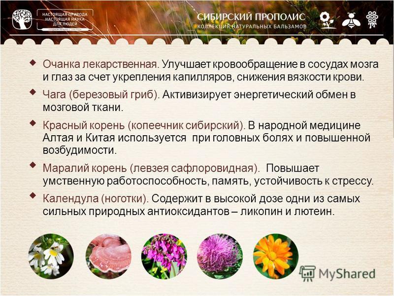 Очанка лекарственная. Улучшает кровообращение в сосудах мозга и глаз за счет укрепления капилляров, снижения вязкости крови. Чага (березовый гриб). Активизирует энергетический обмен в мозговой ткани. Красный корень (копеечник сибирский). В народной м
