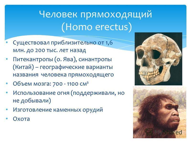 Человек прямоходящий (Homo erectus) Существовал приблизительно от 1,6 млн. до 200 тыс. лет назад Питекантропы (о. Ява), синантропы (Китай) – географические варианты названия человека прямоходящего Объем мозга: 700 - 1100 см³ Использование огня (подде