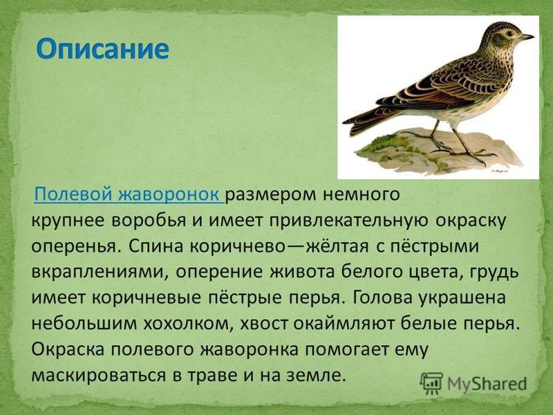 Полевой жаворонок размером немного крупнее воробья и имеет привлекательную окраску оперенья. Спина коричнево жёлтая с пёстрыми вкраплениями, оперение живота белого цвета, грудь имеет коричневые пёстрые перья. Голова украшена небольшим хохолком, хвост