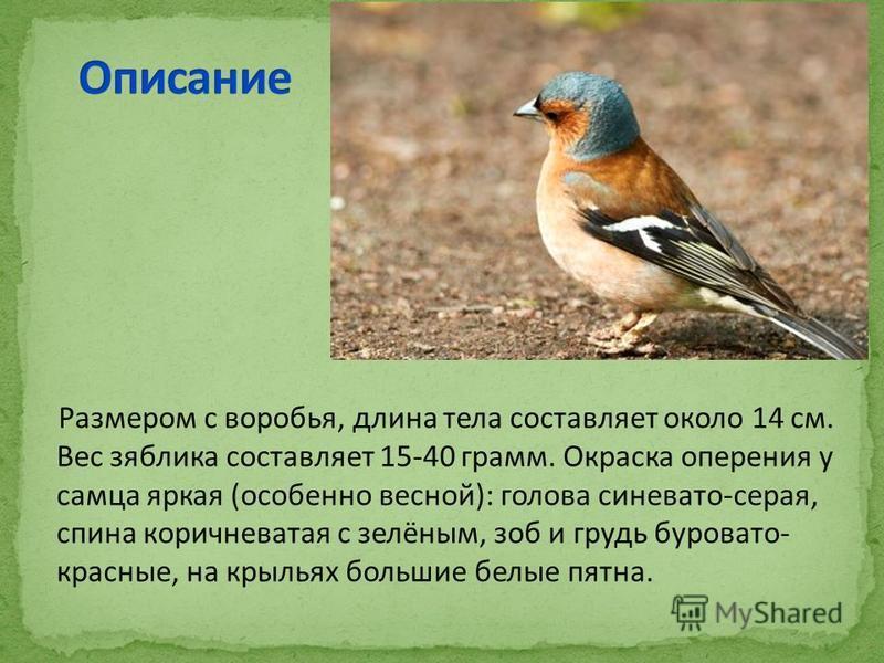 Размером с воробья, длина тела составляет около 14 см. Вес зяблика составляет 15-40 грамм. Окраска оперения у самца яркая (особенно весной): голова синевато-серая, спина коричневатая с зелёным, зоб и грудь буровато- красные, на крыльях большие белые