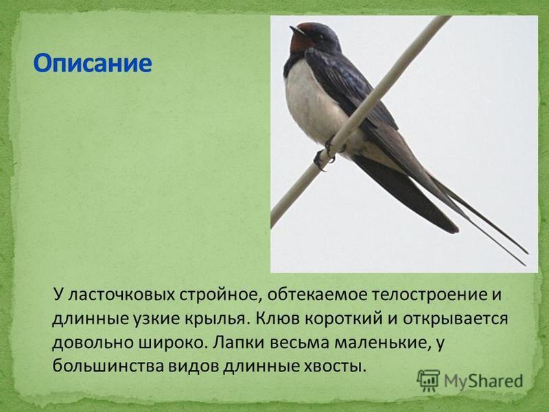 У ласточковых стройное, обтекаемое тело строение и длинные узкие крылья. Клюв короткий и открывается довольно широко. Лапки весьма маленькие, у большинства видов длинные хвосты.