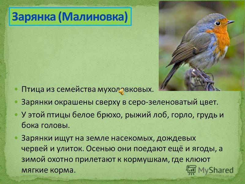 Птица из семейства мухоловковых. Зарянки окрашены сверху в серо-зеленоватый цвет. У этой птицы белое брюхо, рыжий лоб, горло, грудь и бока головы. Зарянки ищут на земле насекомых, дождевых червей и улиток. Осенью они поедают ещё и ягоды, а зимой охот