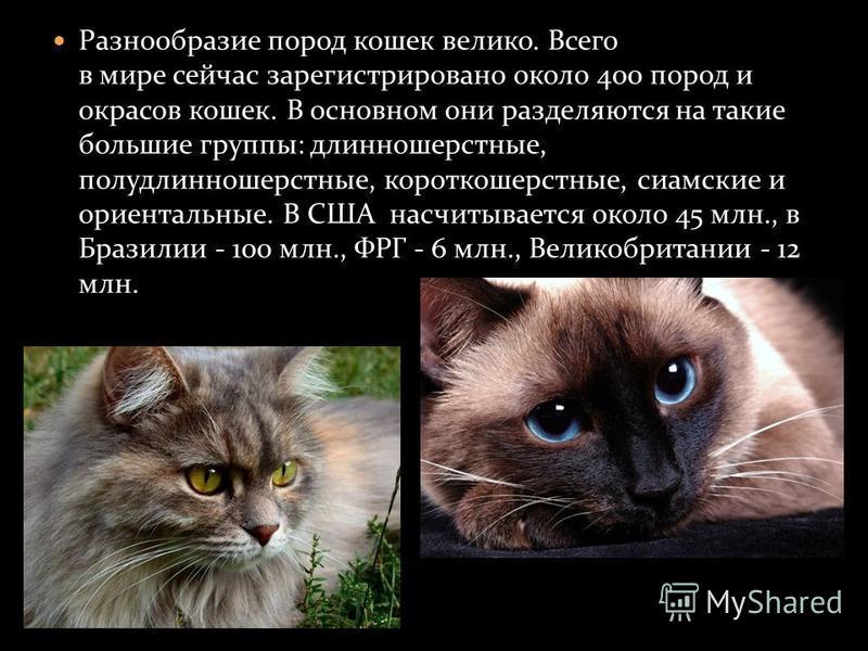 Разнообразие пород кошек велико. Всего в мире сейчас зарегистрировано около 400 пород и окрасов кошек. В основном они разделяются на такие большие группы: длинношерстные, полудлинношерстные, короткошерстные, сиамские и ориентальные. В США насчитывает
