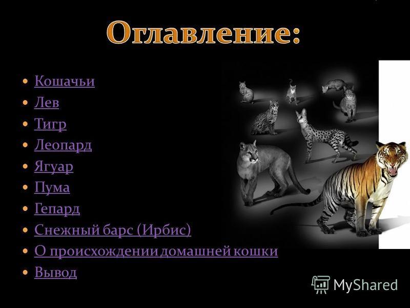 Кошачьи Лев Тигр Леопард Ягуар Пума Гепард Снежный барс (Ирбис) О происхождении домашней кошки Вывод