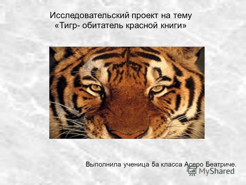 Исследовательский проект на тему «Тигр- обитатель красной книги» Выполнила ученица 5 а класса Асеро Беатриче.