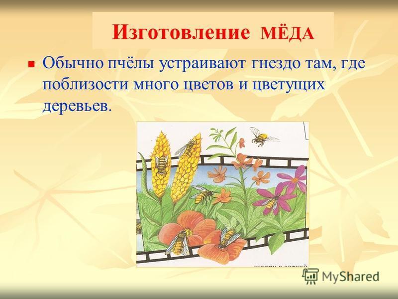 Изготовление МЁДА Обычно пчёлы устраивают гнездо там, где поблизости много цветов и цветущих деревьев.