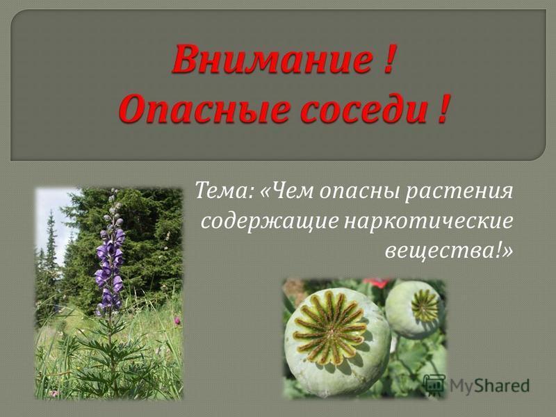 Тема : « Чем опасны растения содержащие наркотические вещества !»