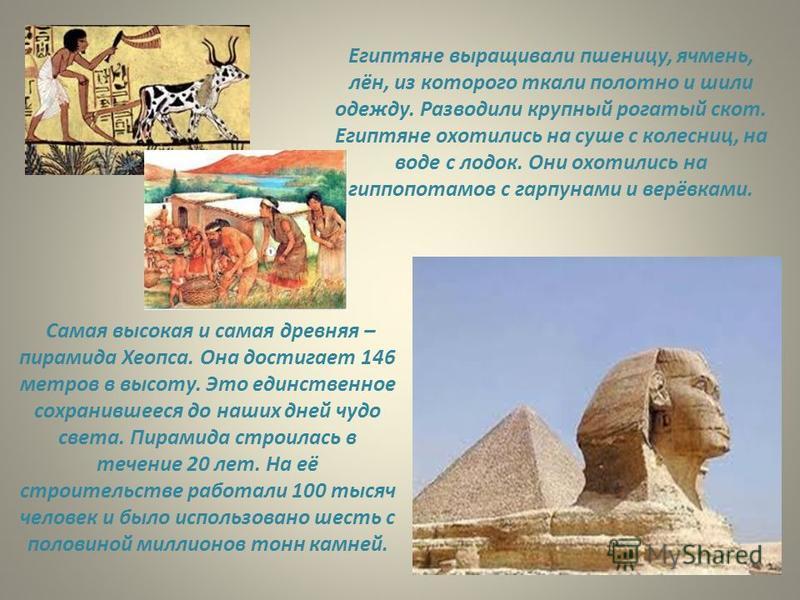 Египтяне выращивали пшеницу, ячмень, лён, из которого ткали полотно и шили одежду. Разводили крупный рогатый скот. Египтяне охотились на суше с колесниц, на воде с лодок. Они охотились на гиппопотамов с гарпунами и верёвками. Самая высокая и самая др