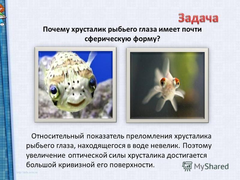 Почему хрусталик рыбьего глаза имеет почти сферическую форму? Относительный показатель преломления хрусталика рыбьего глаза, находящегося в воде невелик. Поэтому увеличение оптической силы хрусталика достигается большой кривизной его поверхности.
