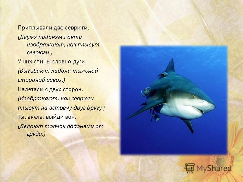 Приплывали две севрюги, (Двумя ладонями дети изображают, как плывут севрюги.) У них спины словно дуги. (Выгибают ладони тыльной стороной вверх.) Налетали с двух сторон. (Изображают, как севрюги плывут на встречу друг другу.) Ты, акула, выйди вон. (Де