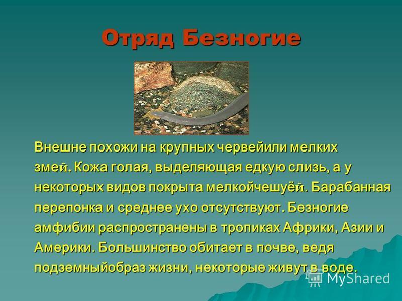 Отряд Безногие Внешне похожи на крупных червей или мелких змей. Кожа голая, выделяющая едкую слизь, а у некоторых видов покрыта мелкойчешуёй. Барабанная перепонка и среднее ухо отсутствуют. Безногие амфибии распространены в тропиках Африки, Азии и Ам