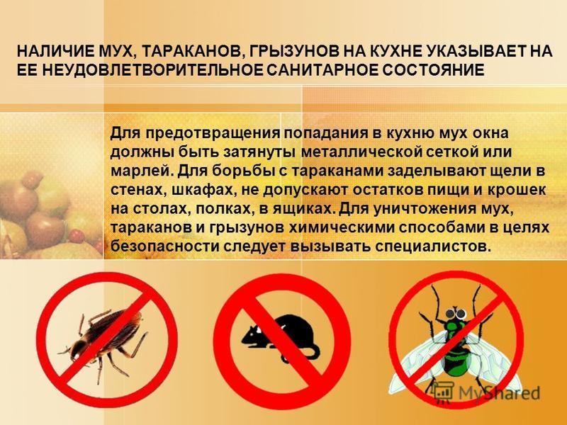 НАЛИЧИЕ МУХ, ТАРАКАНОВ, ГРЫЗУНОВ НА КУХНЕ УКАЗЫВАЕТ НА ЕЕ НЕУДОВЛЕТВОРИТЕЛЬНОЕ САНИТАРНОЕ СОСТОЯНИЕ Для предотвращения попадания в кухню мух окна должны быть затянуты металлической сеткой или марлей. Для борьбы с тараканами заделывают щели в стенах,