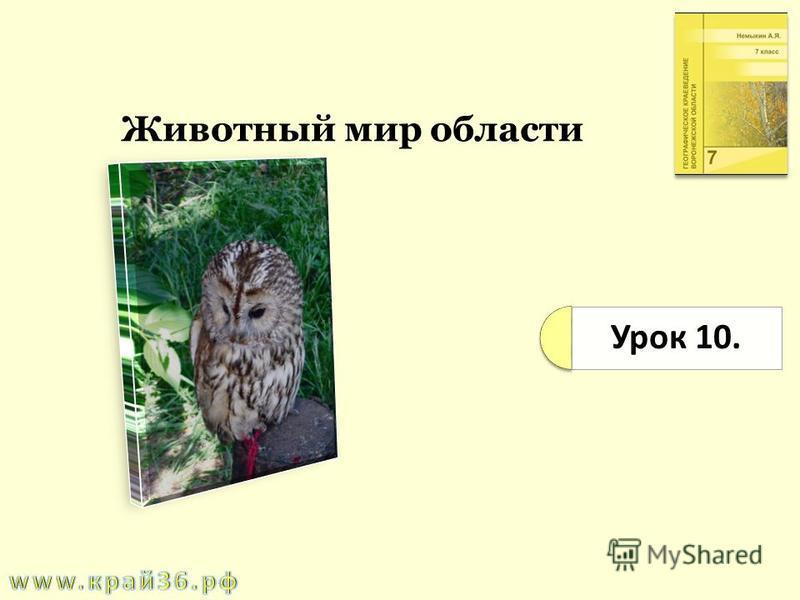 Урок 10. Животный мир области