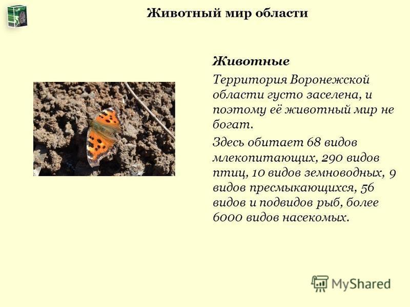 Животный мир области Животные Территория Воронежской области густо заселена, и поэтому её животный мир не богат. Здесь обитает 68 видов млекопитающих, 290 видов птиц, 10 видов земноводных, 9 видов пресмыкающихся, 56 видов и подвидов рыб, более 6000 в