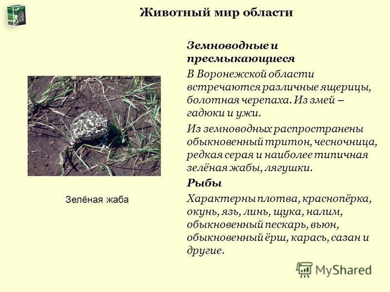 Животный мир области Земноводные и пресмыкающиеся В Воронежской области встречаются различные ящерицы, болотная черепаха. Из змей – гадюки и ужи. Из земноводных распространены обыкновенный тритон, чесночница, редкая серая и наиболее типичная зелёная