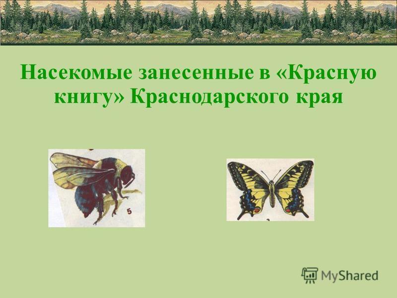 Насекомые занесенные в «Красную книгу» Краснодарского края