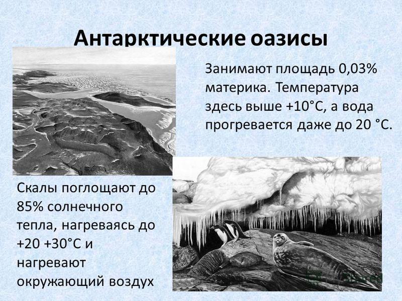 Антарктические оазисы Занимают площадь 0,03% материка. Температура здесь выше +10°С, а вода прогревается даже до 20 °С. Скалы поглощают до 85% солнечного тепла, нагреваясь до +20 +30°С и нагревают окружающий воздух