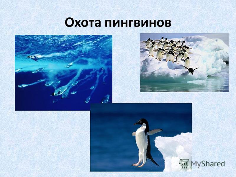 Охота пингвинов