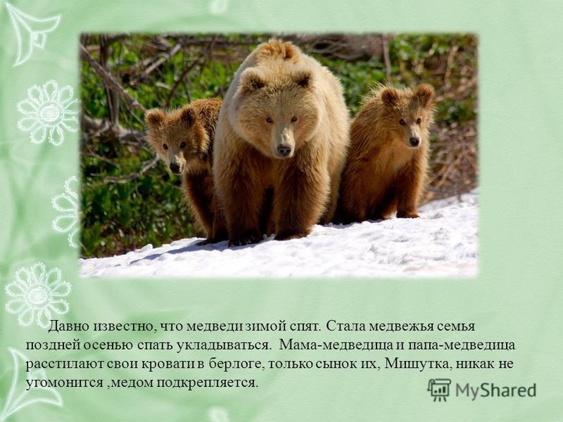 Давно известно, что медведи зимой спят. Стала медвежья семья поздней осенью спать укладываться. Мама-медведица и папа-медведица расстилают свои кровати в берлоге, только сынок их, Мишутка, никак не угомонится,медом подкрепляется.
